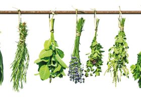 Heavenly Herbs