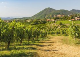 On the Prosecco Trail in the Veneto