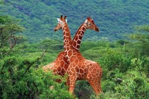 Image: South African Safari / Anna Omelchenko / stock.adobe.com