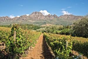 Image: Stellenbosch Vineyards / Delphotostock / stock.adobe.com