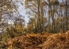 Forest Bathing: Woods for wellbeing